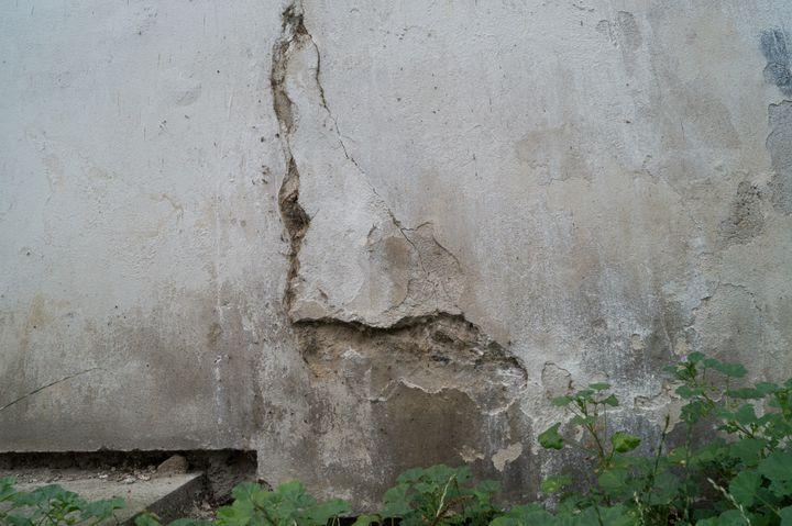 Texture #Wall #Plant #Flagstone