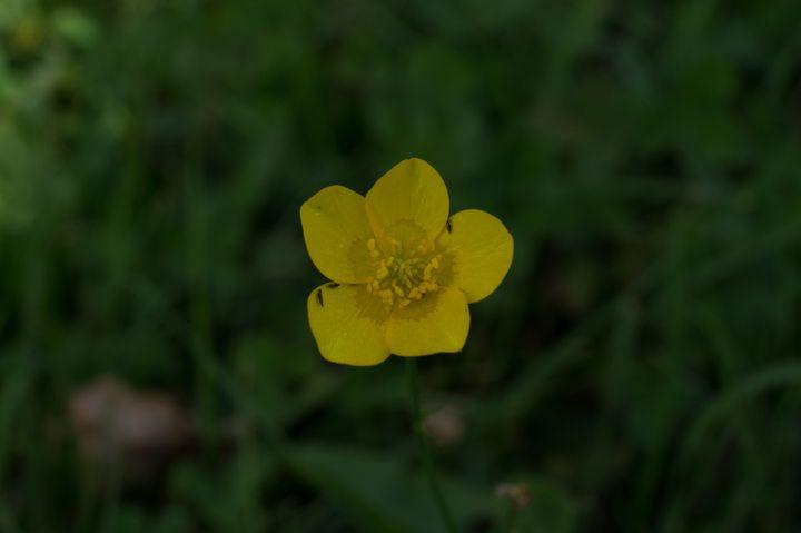 Texture #Plant #Geranium #Flower #Anemone
