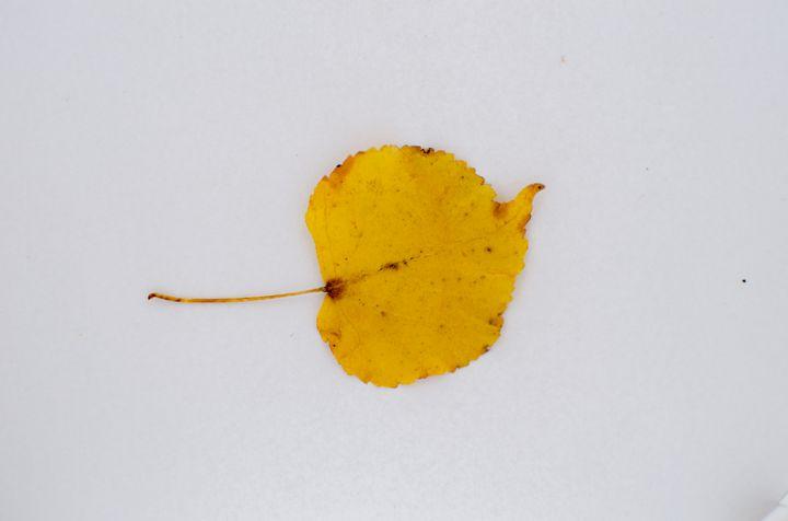 Texture #Leaf