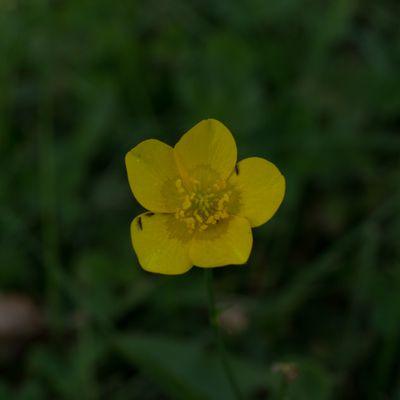 CG Texture - #Plant #Geranium #Flower #Anemone /