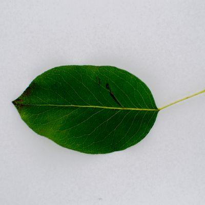 Texture: #Leaf